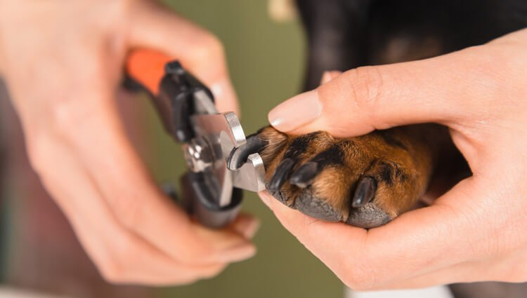 How to Cut Your Dog's Nail