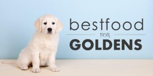 Best Diet for Your Golden Retriever