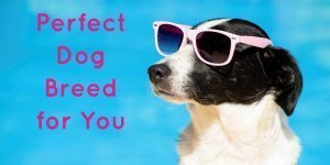 What Dog Breed Is the Perfect for You